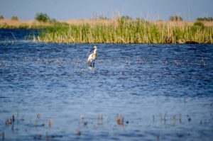 must-see natural destinations located close to Bucharest - the Danube Delta