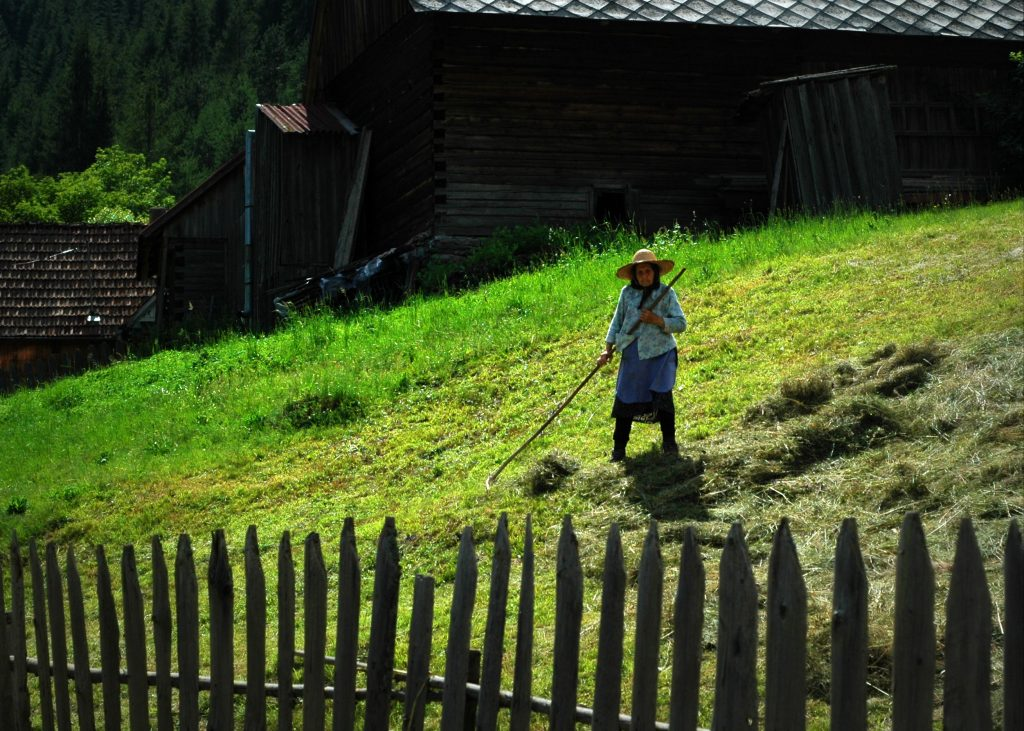 interesting facts about Romania - gathering hay